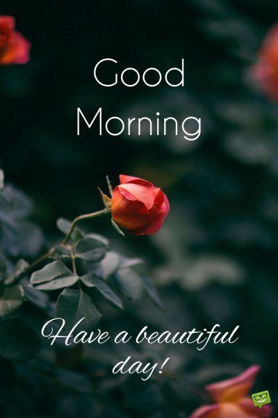 صباح الخير وتمنياتي بيوم سعيد بالانجليزية