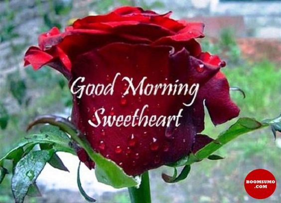 صباح الخير يا حبيب قلبي على وردة