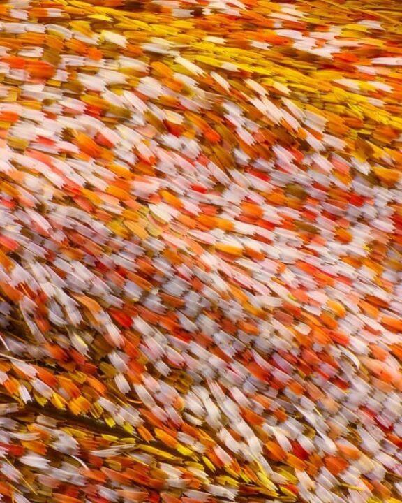 صور جناحات فراشات كما لم تراها من قبل باستخدام تقنية الماكرو 3