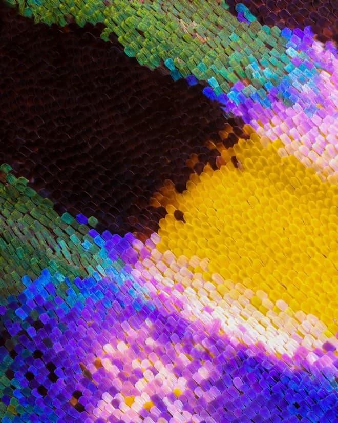 صور أجنحة فراشات كما لم تراها من قبل باستخدام تقنية الماكرو 4
