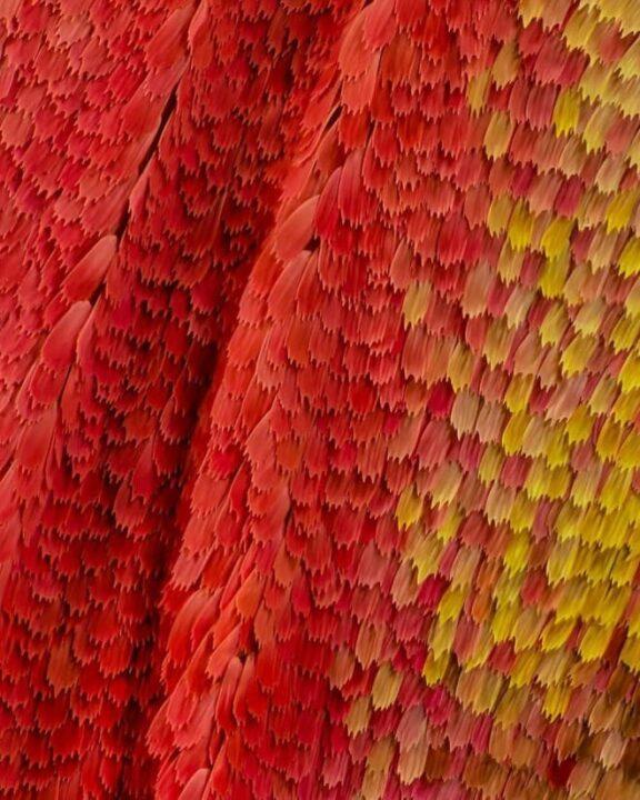 صور أجنحة فراشات كما لم تراها من قبل باستخدام تقنية الماكرو 6